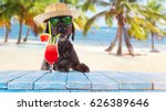 Stock photo black mutt dog posing on the beach with colorful cocktail 626389646