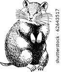 cricetinae  hamster  | Shutterstock .eps vector #62643517