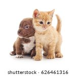 kitten and puppy isolated on a... | Shutterstock . vector #626461316