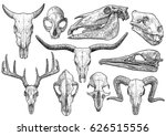 skull collection illustration ... | Shutterstock .eps vector #626515556