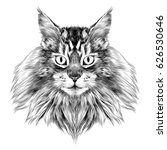 cat breed maine coon face... | Shutterstock .eps vector #626530646