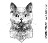 Stock vector cat breed british shorthair face sketch vector black and white drawing 626531012