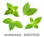 mint leaves isolated. set | Shutterstock . vector #626575232