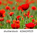 red poppy flowers on the field... | Shutterstock . vector #626624525