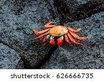 Galapagos Red Crab On Black...