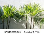 palm tree with concrete wall  | Shutterstock . vector #626695748