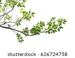 tree branch isolated | Shutterstock . vector #626724758