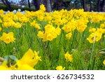 beautiful flower garden ... | Shutterstock . vector #626734532