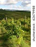 vineyard in chianti  tuscany ... | Shutterstock . vector #62679988