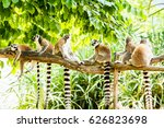 Ring Tailed Lemur In Chiangmia...