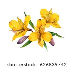 Alstroemeria Watercolor...