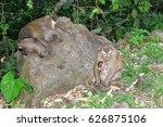 Monkey Sleep On The Stone And...