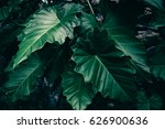 tropical leaves texture... | Shutterstock . vector #626900636