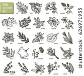 hand drawn vector set of herbs... | Shutterstock .eps vector #626971955