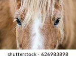 Stock photo haflinger horse eyes 626983898