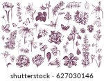 highly detailed hand drawn... | Shutterstock .eps vector #627030146
