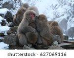 monkey | Shutterstock . vector #627069116