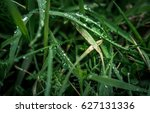 plants with fresh water drops...   Shutterstock . vector #627131336