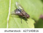 fly on a leaf | Shutterstock . vector #627140816