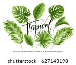 Stock vector tropical palm leaves set isolated on white background vector illustration eps 627143198