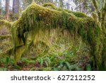 Trees Covered In Moss In A...