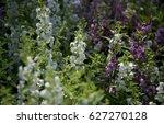 flower | Shutterstock . vector #627270128