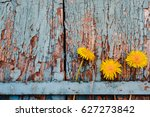 Three Dandelions Placed On An...