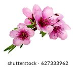 peach flowers isolated on white | Shutterstock . vector #627333962