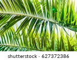 Palm Green Leaves In Tropics ...