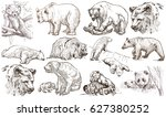 animals   bears   around the... | Shutterstock . vector #627380252
