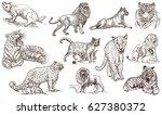 animals   cats   around the... | Shutterstock . vector #627380372