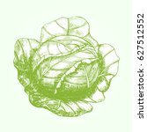 head of cabbage hand draw... | Shutterstock .eps vector #627512552