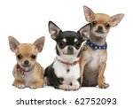 Chihuahuas  3 Years Old  2...