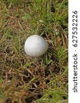 Small photo of Meadow mushroom, Agaricus campestris