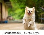 Stock photo happy dog 627584798