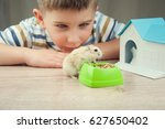 Stock photo little boy with hamster 627650402