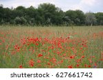 red poppies field | Shutterstock . vector #627661742