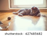 Stock photo beautiful playful tabby cat lying on the living room floor playing with a ball of string 627685682