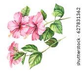 flower hibiscus on white... | Shutterstock . vector #627831362