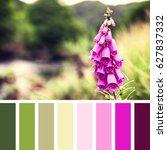 foxglove flower in snowdonia... | Shutterstock . vector #627837332