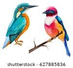 Set Of Watercolor Birds...