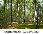 Small photo of The forests also awaken in spring