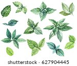 mint leaves watercolor... | Shutterstock . vector #627904445