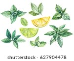 lemon   lime and mint... | Shutterstock . vector #627904478