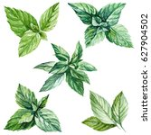 mint leaves watercolor... | Shutterstock . vector #627904502