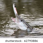 Northern pike on hook in water - stock photo