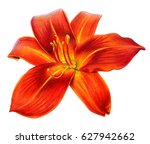 Day Lily Flower Orange Drawin...