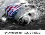 B W Of Great Pyrenees Dog With...