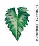 tropical leaf isolated on white ... | Shutterstock . vector #627948746