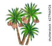 date palm  phoenix dactylifera .... | Shutterstock .eps vector #627966926